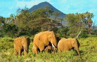 تعرّف على عوامل الجذب السياحية في كينيا,............. كينيا كما لم تراها من قبل